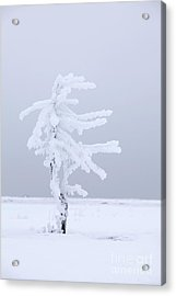 Covered In Frost Acrylic Print by Tim Grams
