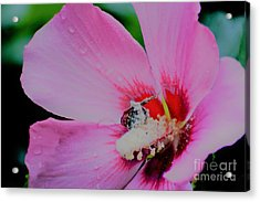 Covered In Pollen Acrylic Print
