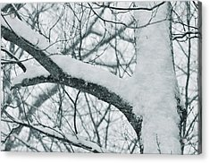 Covered In White Acrylic Print by JAMART Photography