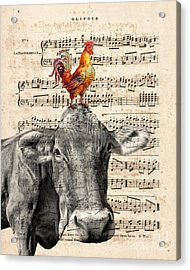 Cow And Rooster Acrylic Print