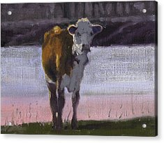 Cow At The Pond Acrylic Print by John Reynolds