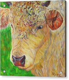 Cute And Curly Cow Acrylic Print
