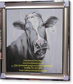 cow Acrylic Print by Darren