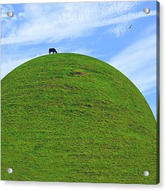 Cow Eating On Round Top Hill Acrylic Print by Mike McGlothlen