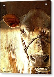 Cow Face Acrylic Print by Tammy Ishmael - Eizman
