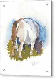 Cow I Acrylic Print