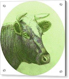 Cow II Acrylic Print by Desiree Warren