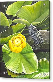 Cow Lily Acrylic Print by Catherine G McElroy