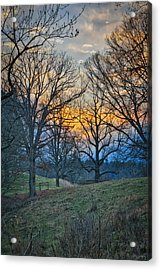 Cow Pasture At Dusk Acrylic Print
