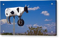 Cow Power Acrylic Print by Skip Hunt