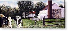 Cow Spotting Acrylic Print by Denny Bond