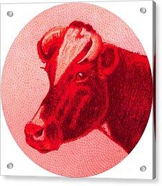 Cow Vi Acrylic Print by Desiree Warren