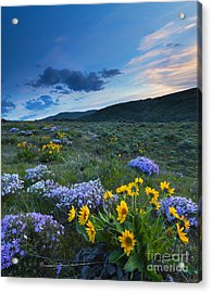 Cowiche Spring Sunset Acrylic Print by Mike Dawson