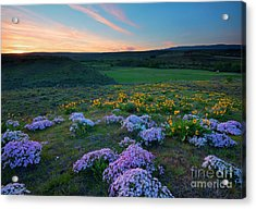 Cowiche Sunset Acrylic Print by Mike Dawson