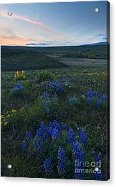 Cowiche Wildflower Sunset Acrylic Print