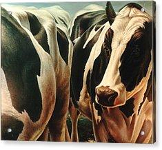 Cows 1 Acrylic Print by Hans Droog