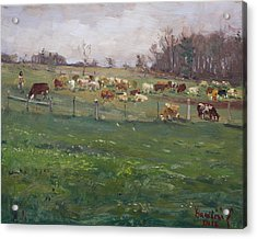 Cows In A Farm, Georgetown  Acrylic Print by Ylli Haruni