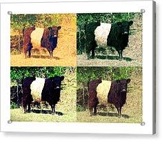 Cows Acrylic Print by Joanne Elizabeth