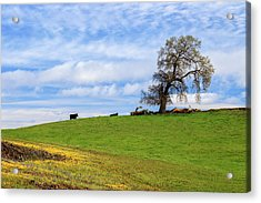 Cows On A Spring Hill Acrylic Print by James Eddy