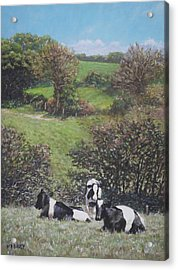 Acrylic Print featuring the painting Cows Sitting By Hill Relaxing by Martin Davey