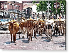 Cowtown Stockyards Acrylic Print