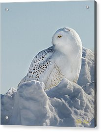 Acrylic Print featuring the photograph Coy Snowy Owl by Rikk Flohr