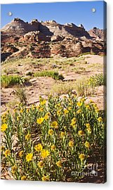 Coyote Buttes Mule's Ear Acrylic Print by Greg Clure