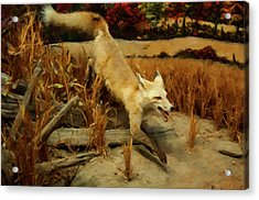 Acrylic Print featuring the digital art Coyote  by Chris Flees