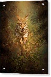 Coyote Energy Acrylic Print