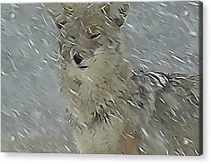 Coyote In Winter Acrylic Print by Errol Savage