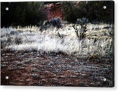 Coyote Acrylic Print by Joseph Frank Baraba