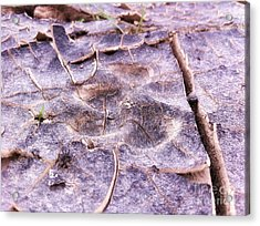 Coyote Tracks Power Of Grass Punching Thru The Mudpack. Acrylic Print by Spencer Lines