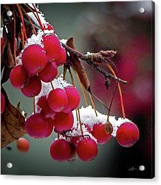 Crab Apples Snow Acrylic Print
