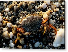 Acrylic Print featuring the photograph Crab On The Beach by Paul SEQUENCE Ferguson             sequence dot net