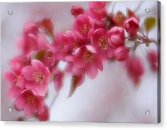 Acrylic Print featuring the photograph Crabapple Blossom - Dark Pink by Diane Alexander