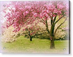 Acrylic Print featuring the photograph Crabapple Confection by Jessica Jenney