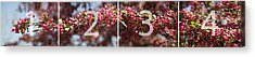 Crabapple In Spring Panoramic Map Acrylic Print