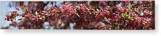 Crabapple In Spring Panoramic Acrylic Print