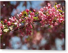 Crabapple In Spring Section 2 Of 4 Acrylic Print