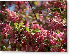 Crabapple In Spring Section 4 Of 4 Acrylic Print