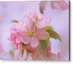 Crabapple Pink Acrylic Print by MTBobbins Photography