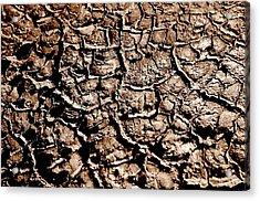 Cracked Earth Acrylic Print by Caroline Clark