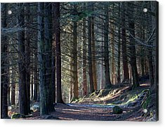 Craig Dunain - Forest In Winter Light Acrylic Print