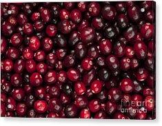Cranberries Acrylic Print by Elena Elisseeva