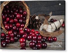 Cranberries Still Life Acrylic Print by Elena Elisseeva