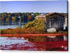 Cranberry Bog Farm II Acrylic Print by Gina Cormier