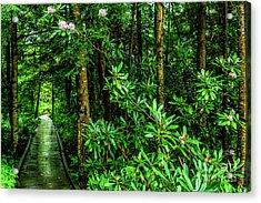 Cranberry Glades Boardwalk Acrylic Print