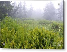 Cranberry Glades Early Morning Acrylic Print by Thomas R Fletcher