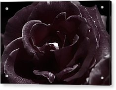 Cranberry Rose Acrylic Print by Clayton Bruster