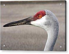 Crane Closeup Acrylic Print